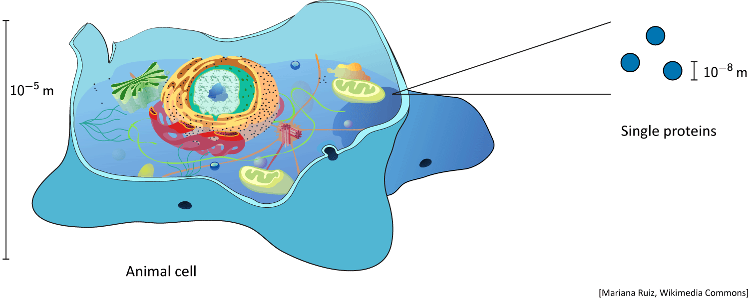 Schematic cell